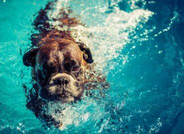 Pes v bazénu