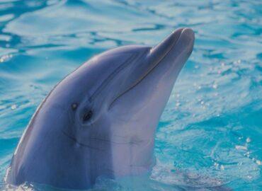 delfin v bazénu